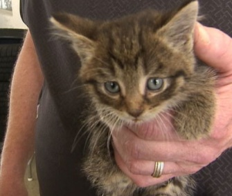 It took mechanics two hours to free this kitten from a car's dashboard.