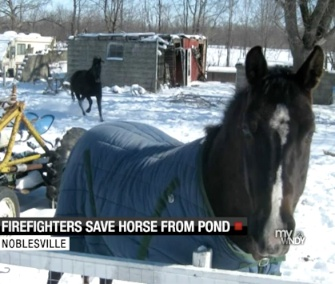 Firefighters pulled Nyah the horse from an icy pond in Indiana.