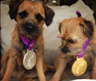 Andy Murray's Border Terriers, Rusty and Maggie May, wear his gold and silver Olympic medals.
