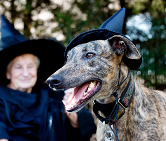 Dog as Witch
