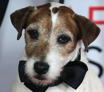 Uggie, the star of 'The Artist,' inks a book deal.