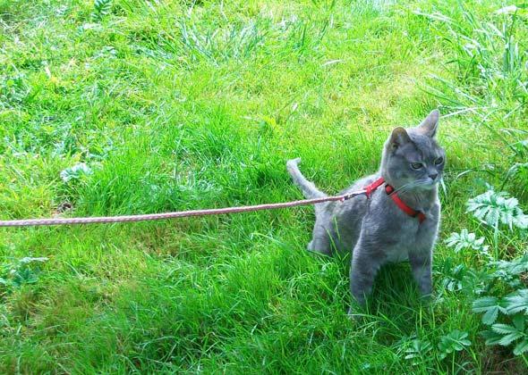 Midget the cat camping