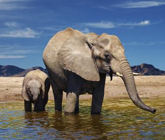 Elephants in watering hole
