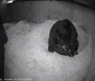 Billie Jean cuddles with her cubs on the zoo's web cam.