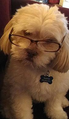 Tiffany Craig's Dog Dante