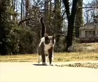 Mayhem the cat traveled six miles and found his original owner.