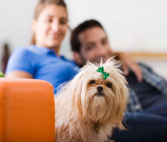 Dog with owners on couch