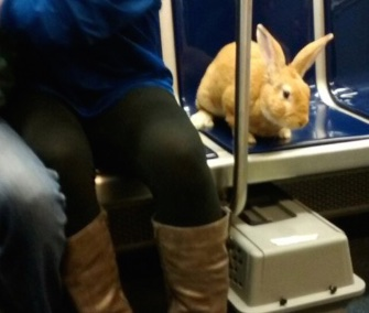 The MBTA Tweeted this cute reminder that bunnies have to stay in their carriers on the T in Boston.
