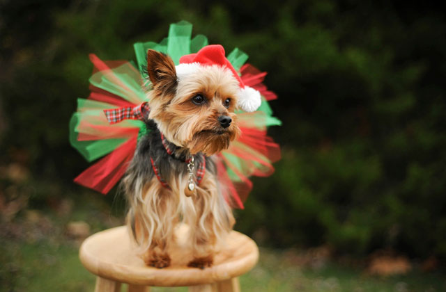 Christmas Tutu Dog Dress