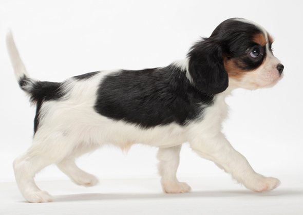 Meet 10 People Pleasing Dog Breeds