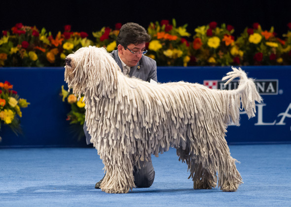 2012 national dog show.