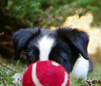 Puppy and ball