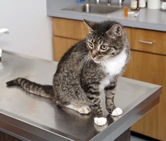 Cat on vet table
