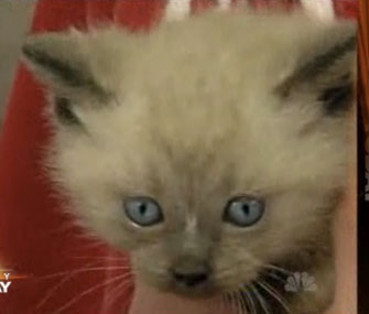 Home builders in Utah to cut through cement to rescue a litter of kittens.