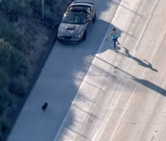 Andie Valerio jumped out of her car and ran to catch a Pit Bull mix who was wandering on a Los Angeles freeway during rush hour last week.