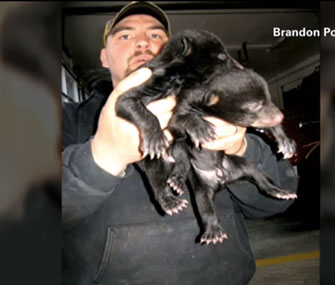 A firefighter rescued three bear cubs he found on the side of a South Carolina road.