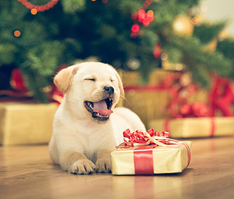 Dog With Holiday Gift