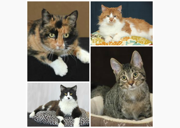 adoptable cats from Elkhart Humane Society