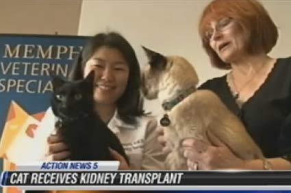 Cat kidney transplant