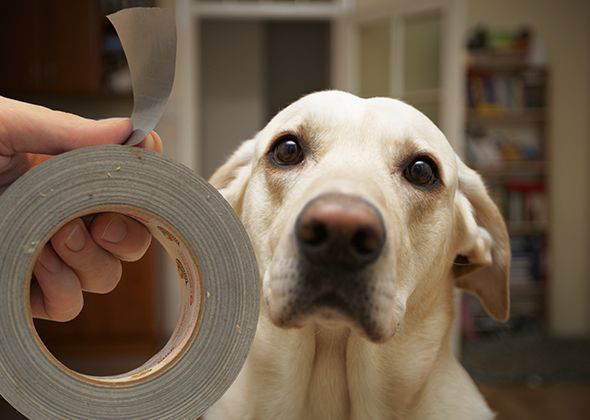 Things in the Home That Scare Pets Duct Tape