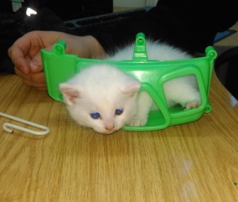 Frosty, a 4-week-old kitten, was freed from a plastic toy by firefighters in England.