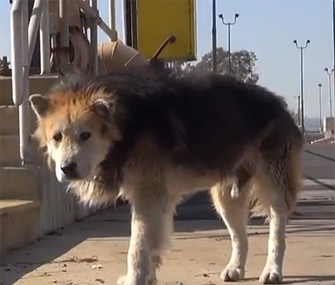 Senior dog rescued from water treatment facility