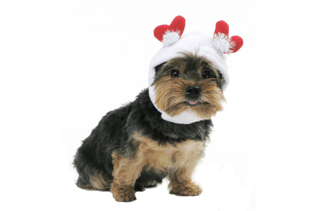 Sweetheart Dog Hat