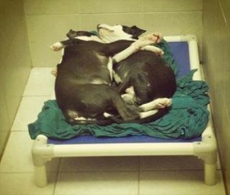 Jermaine, who helps his blind brother Jeffrey get around, naps with him a Philadelphia shelter.
