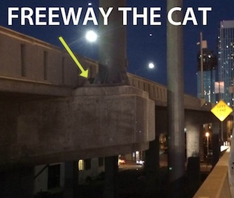 ACC San Francisco posted this image showing where Freeway the cat was found on Facebook.