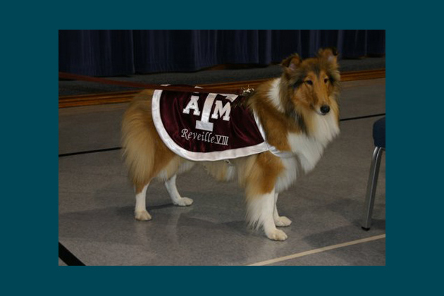 Reveille VIII, Texas A&M University