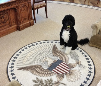 """Bo in the Oval (note the tennis ball in his mouth),"" wrote Souza when he shared this photo on Instagram."