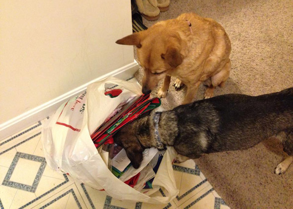 Dogs Open Christmas Gifts