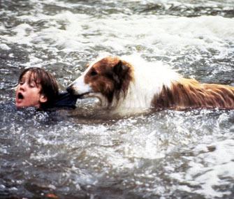 Lassie Saves Timmy