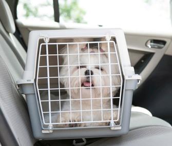 Dog in Crate in Car