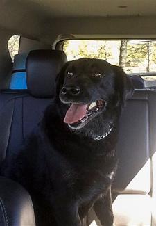 Reporter finds missing dog