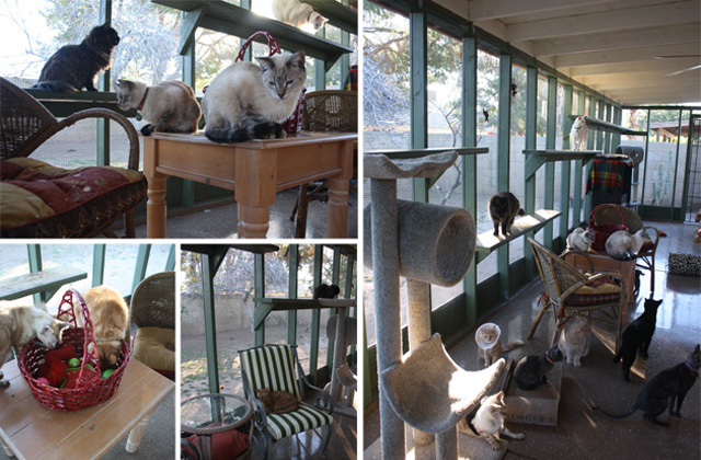 From Functional to Fabulous, These Catio Designs Are Cat-Friendly and Clever