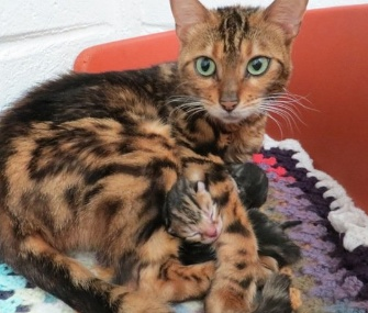 Elise the cat was found with her kittens in the backseat of a stranger's cat in Scotland.