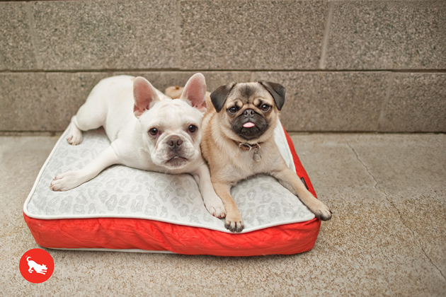 P.L.A.Y. Serengeti Pet Bed