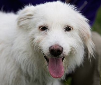 An older dog was found abandoned in a tent after a U.K. Dolly Parton concert. The dog has been named Dolly and the singer has offered to take her in.