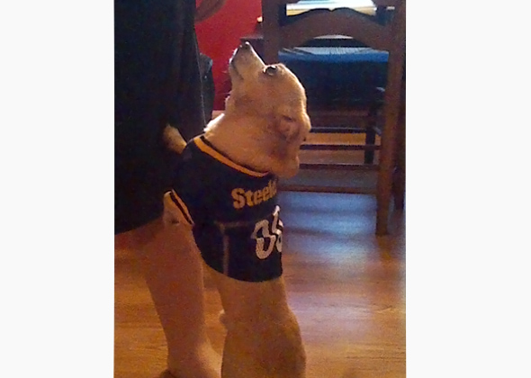 Maxwell rooting for the Steelers