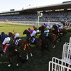 Breeders-cup-experiences-santa-anita-horse-starting-gates-quintevents