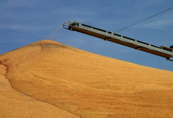 Corn production-Flickr/ConanTheLibrarian