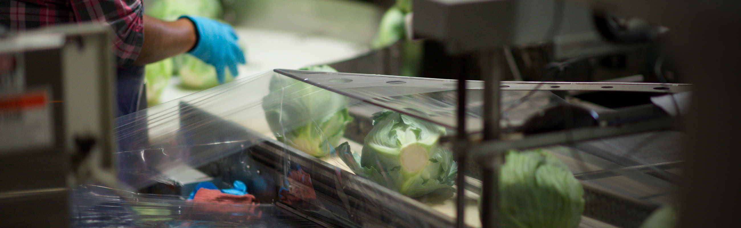Cabbage shrink film packaging