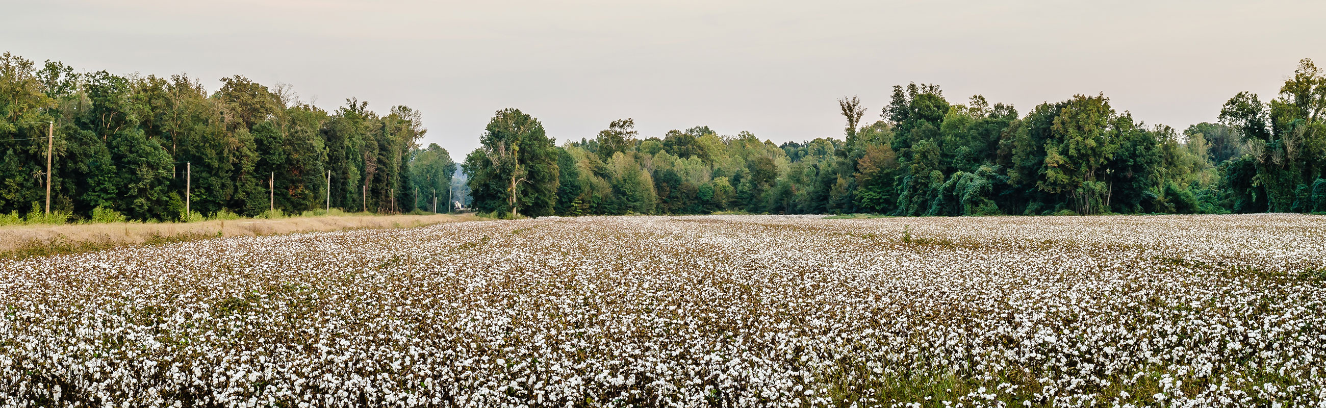 Cotton field textile industry