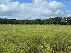 Online Auction: Rural Land In Alachua, FL