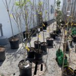 Nursery Flowers, Trees & Shrubs Online Auction In Indianapolis, IN