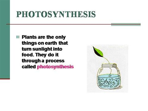 photosynthesis ppt presentation This is a useful revision lesson on photosynthesis find out all you need to know about plants making their own food with light, water and carbon dioxide.