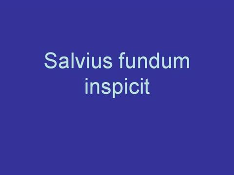 Salvius Fundum Inspicit Stage 13 AuthorSTREAM