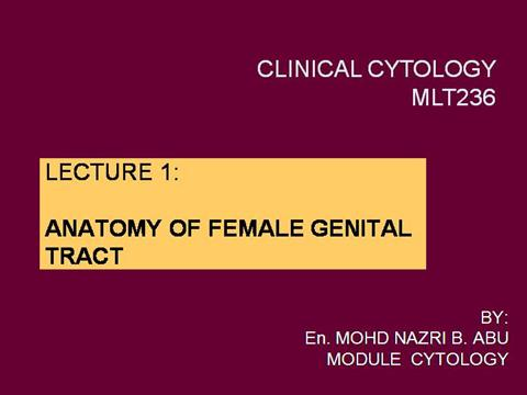 Anatomy Of Female Genital Tract Authorstream