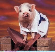 Karate_pig